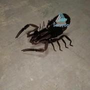 skorpionas2